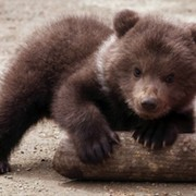 Медвежонок Медвежонок on My World.