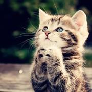Коты для жизни группа в Моем Мире.